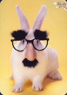 [bunny+with+groucho+glasses%5B3%5D]