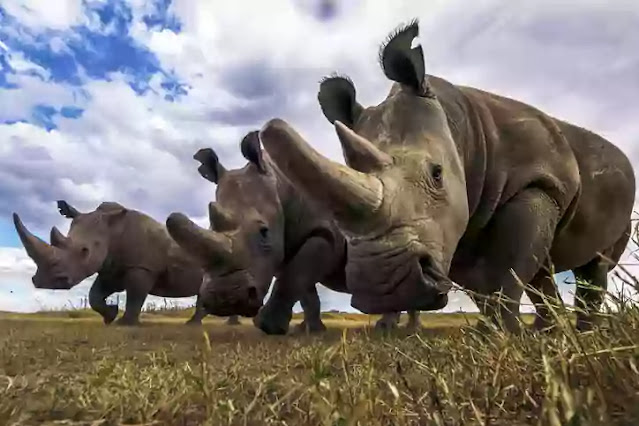 animals that could go extinct in 2021