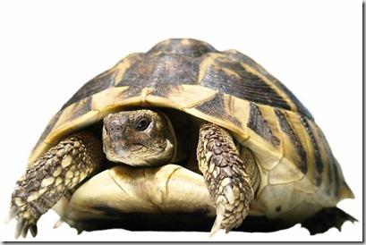 Alimentazione tartarughe terrestri - 2