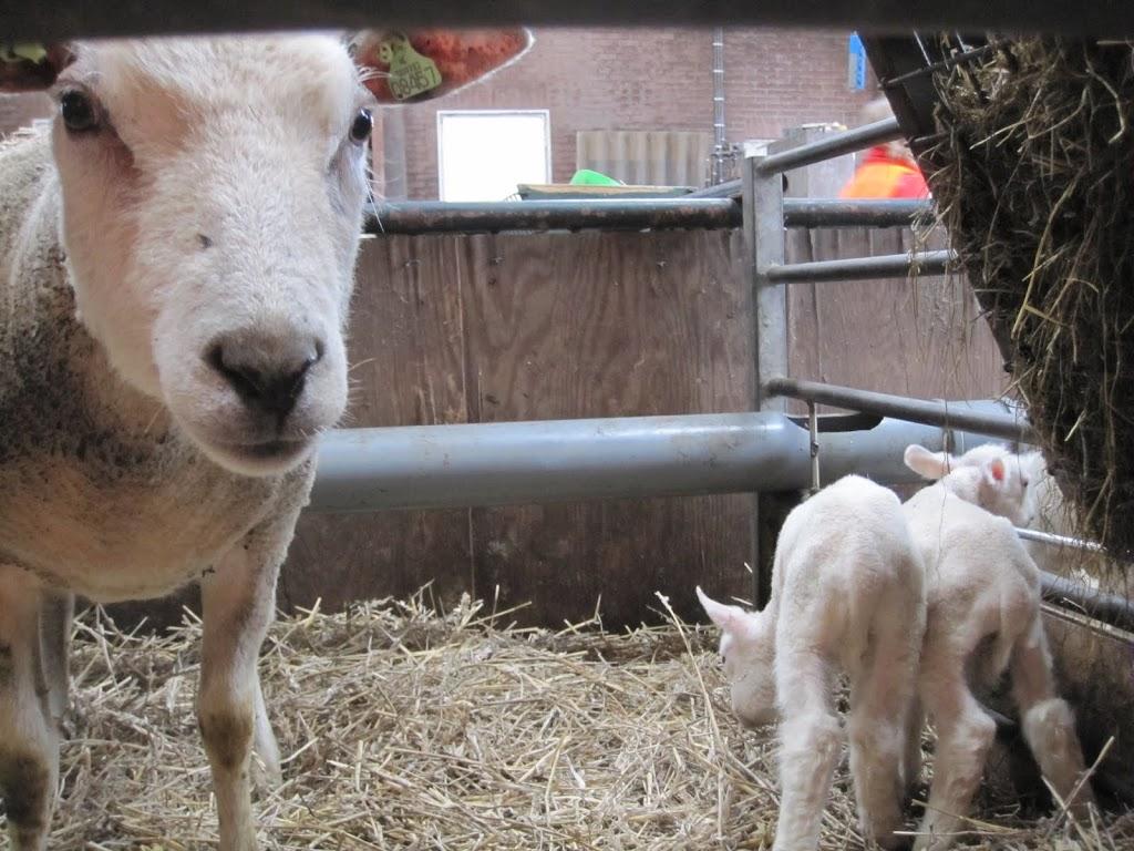 Welpen - Naar de boerderij - IMG_5504.JPG