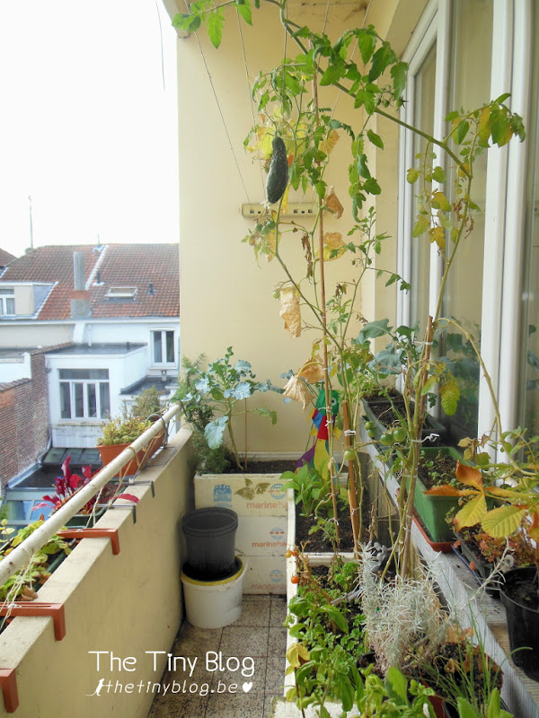 Urban Balcony Vegetable Garden September 2015 Woluwe-Sint-Lambrecht