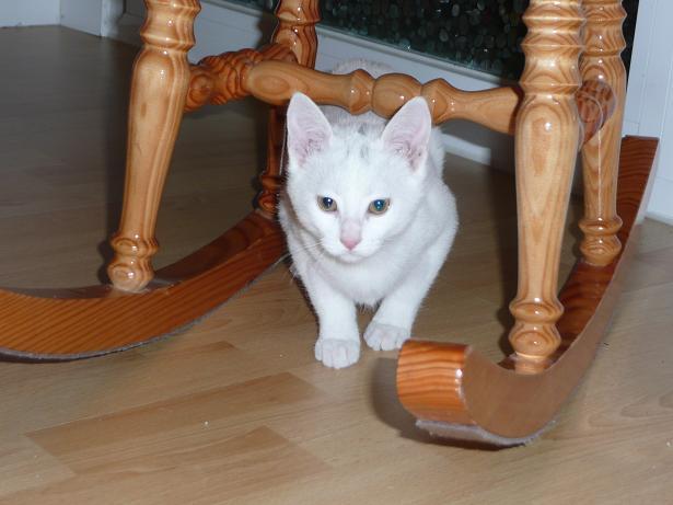 Zuri, cachorrita blanca requeteguapa busca papas.Alava. ¡ADOPTADA! Fotos%2B008
