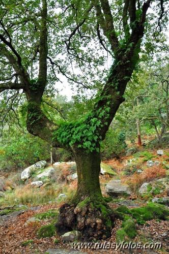 En el corazón del bosque