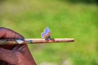 vlinder op kwast blauw