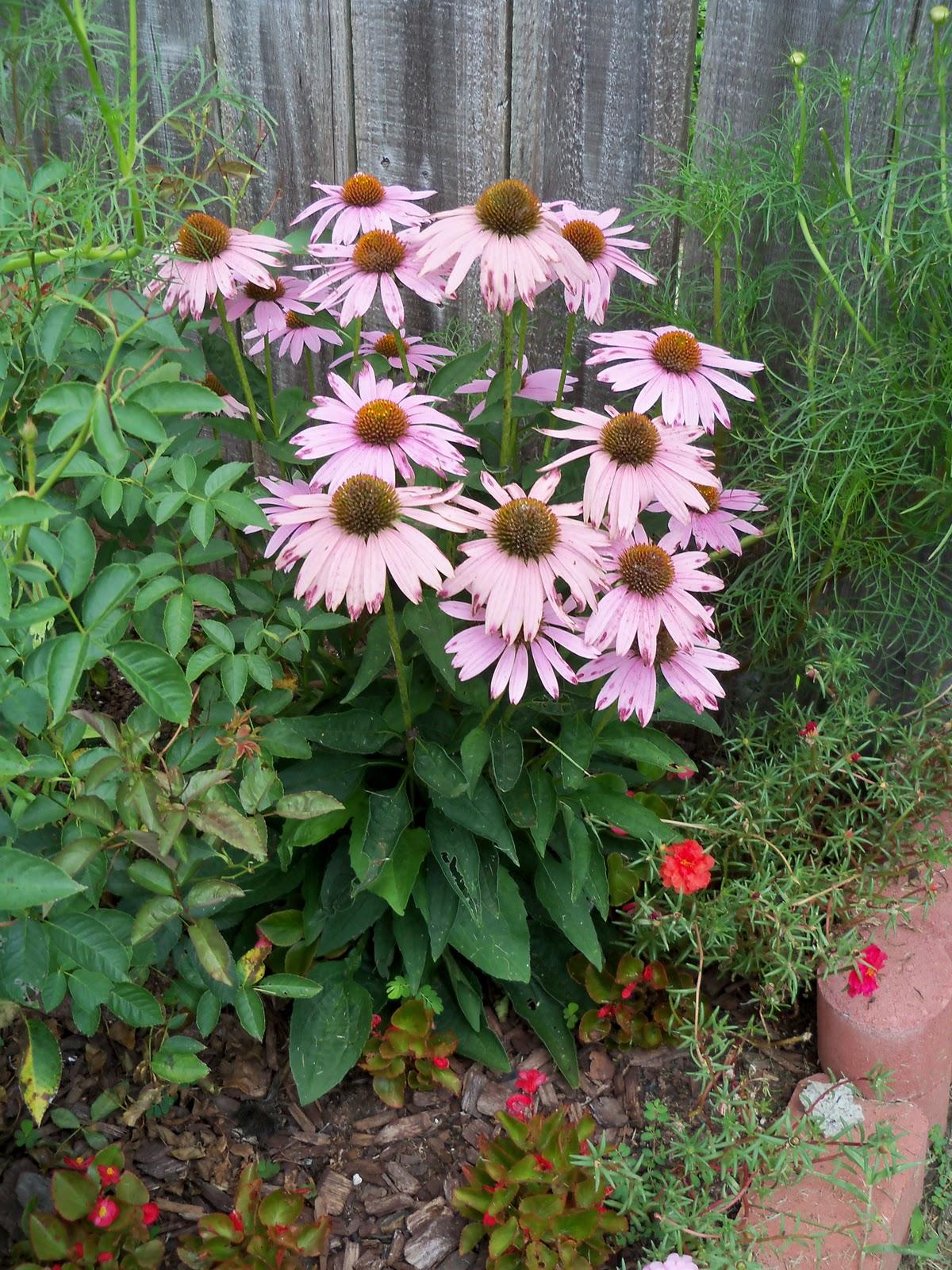 Gardening 2010, Part Three - 101_4825.JPG