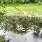 Белогорье - Заповедник лес на Ворскле 036.jpg
