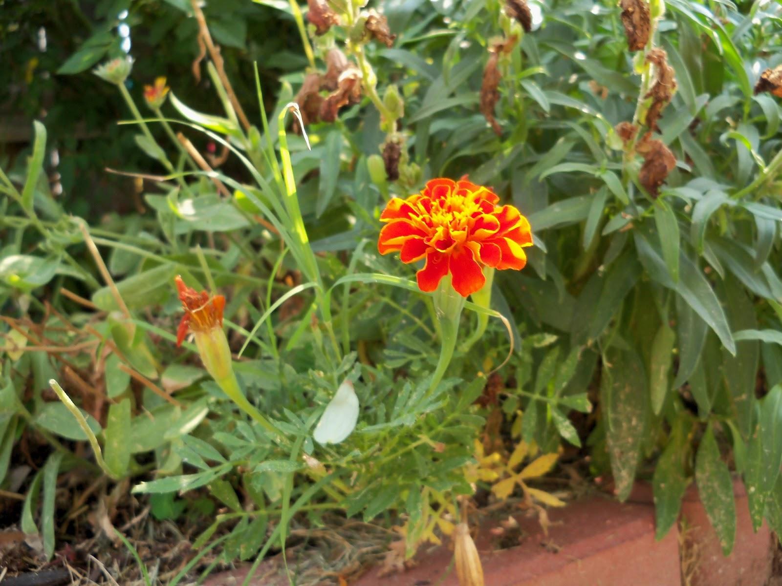 Gardening 2011 - 100_9389.JPG
