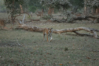 Photo: Wonderful! this is a picture taken by Ken L Koester who was with us at the Safari Lodge and enchanted with India.
