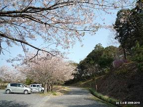 この駐車場に沿う様に桜が咲いてました。当日は丁度散り際の桜吹雪が綺麗でした!