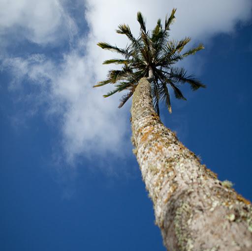 indiamike.com's Profile Picture