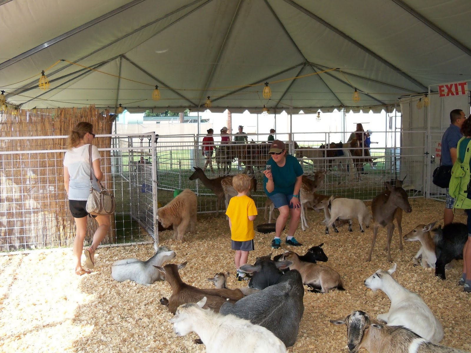 Fort Bend County Fair 2015 - 100_0165.JPG