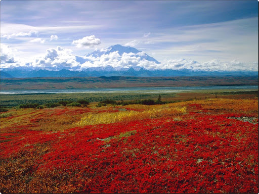Brilliant Colors of Denali National Park, Alaska.jpg