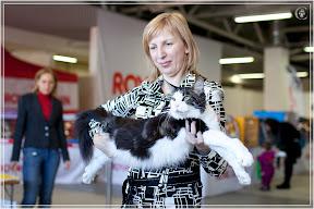 cats-show-25-03-2012-fife-spb-www.coonplanet.ru-044.jpg