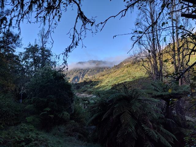 P10_NZ NI Whanganui NP_2018-05-20_IMG_20180520_084109