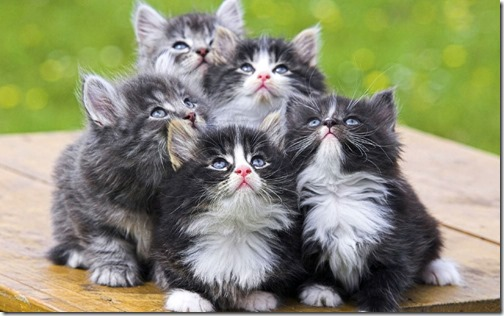 1123cute-cats-wallpapers-background-71
