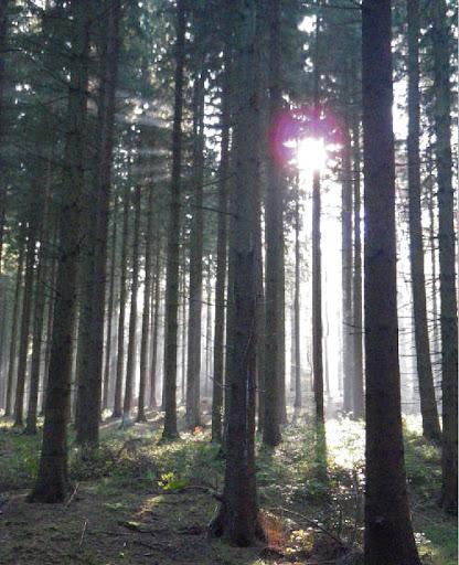 wild%252520forest.jpg