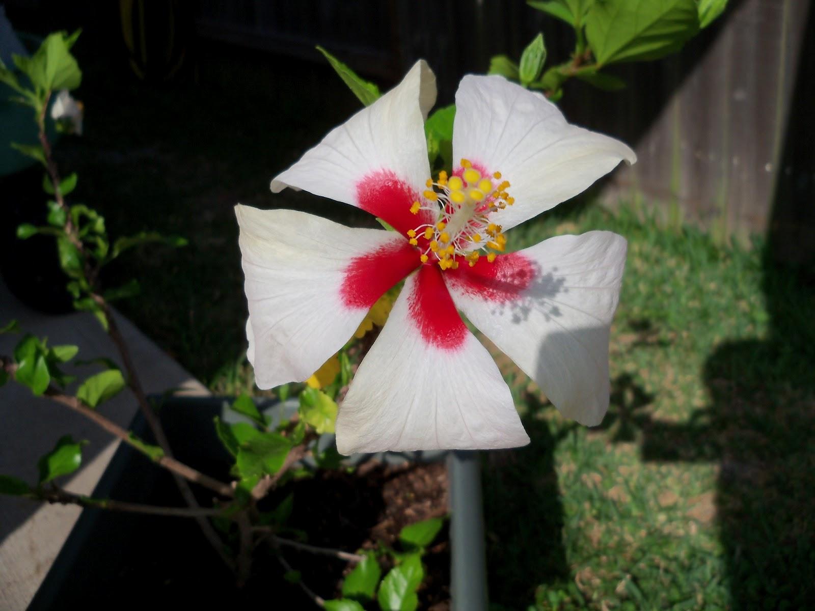 Gardening 2011 - 100_7498.JPG