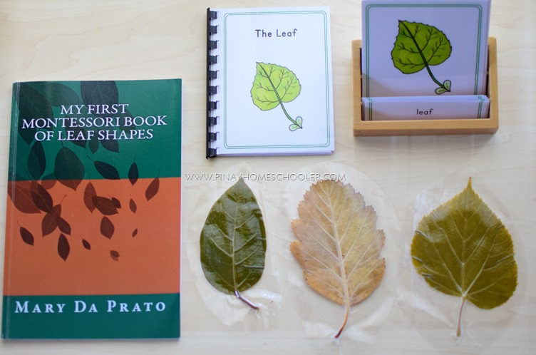 Montessori Inspired Parts of a Leaf Booklet and Nomenclature Cards