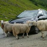 Interessant zo'n Volkswagen.