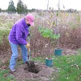 Hammo Planting - Shannon Schiesser - IMG_4892.JPG