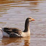 Vogels en dieren - IMG_6011.JPG