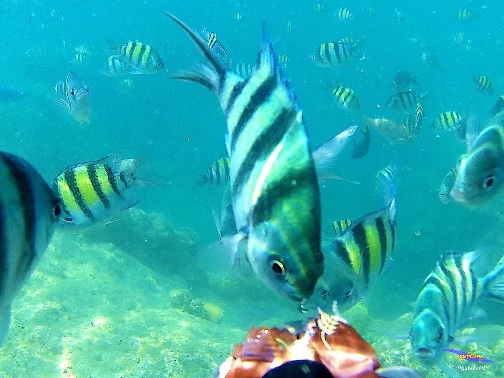 pulau harapan, 5-6 september 2015 skc 004