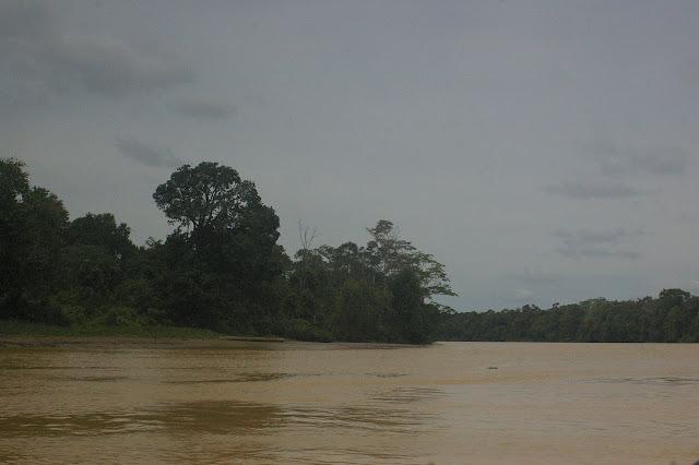Sur la Sangaï Kinabatangan à Sukau (Sabah, Malaisie), 5 août 2011. Photo : J.-M. Gayman