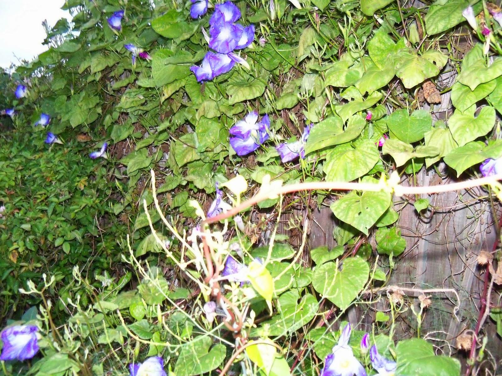 Gardening 2014 - 116_5266.JPG