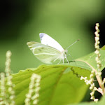 Moth 001.jpg