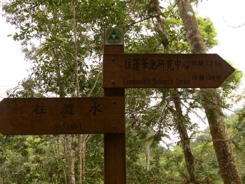Puli, Nantou county, cueillette de thé - P1050636.JPG