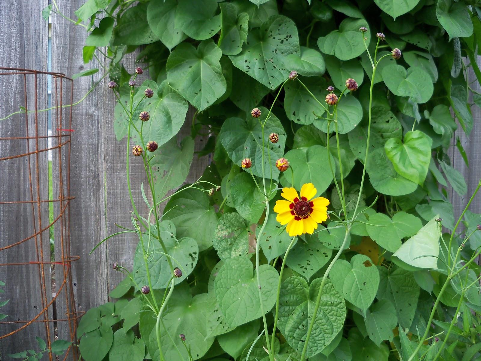 Gardening 2010, Part Three - 101_3531.JPG