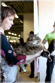 cats-show-25-03-2012-fife-spb-www.coonplanet.ru-018.jpg