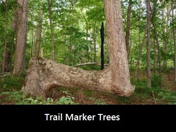 trail-marker-trees