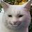Randum Z's profile photo
