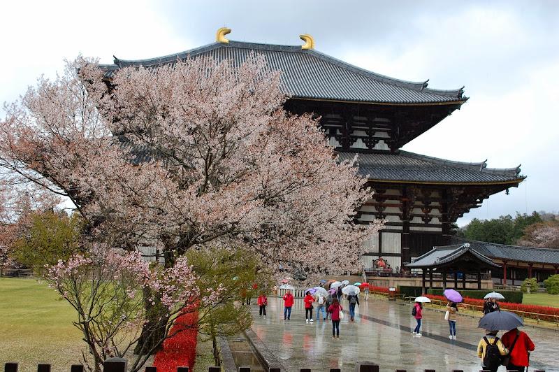 2014 Japan - Dag 8 - jordi-DSC_0500.JPG