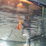 Fish - 101_1800.JPG