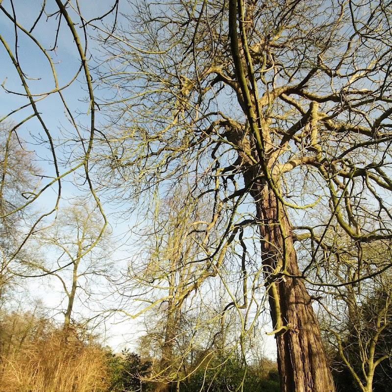 Stowe_Trees_43.JPG