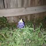 Gardening 2013 - IMG_20130306_191813.jpg