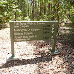 Detailed sign on the Tall Trees walk in Blackbutt Reserve (401341)