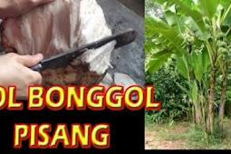Pembuatan MOL (Mikro Organisme Lokal) Bonggol Pisang