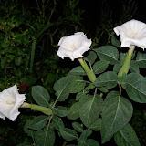 Gardening 2014 - 116_3601.JPG