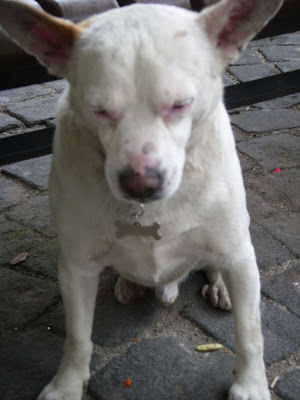 広場にいた犬