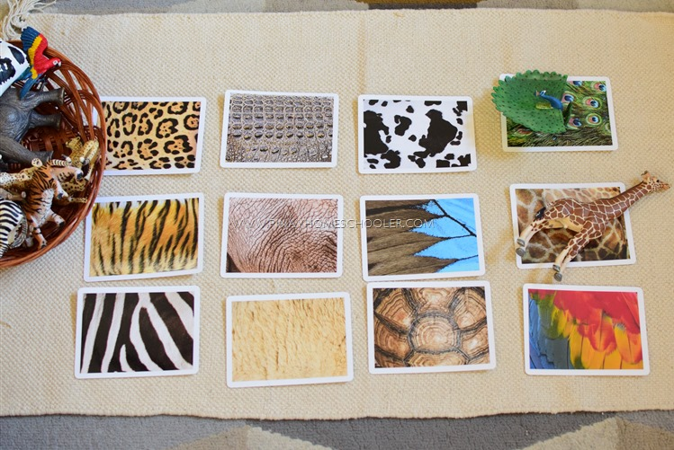 Animal Skin Covers Matching Cards