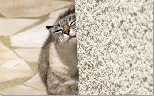fotos de gatos (21)