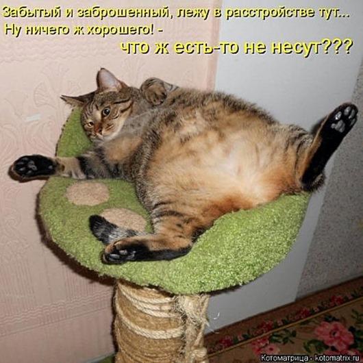 1495826285_kotomatricy-17