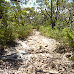 Rocky trail near ridge top campsite (355295)