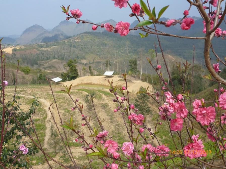 Mùa xuân trên đèo Pha Đin