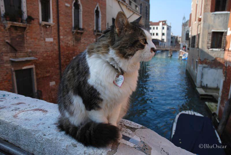 Gatti veneziani 19 02 2010 N 1