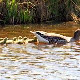 Vogels en dieren - IMG_6426.JPG