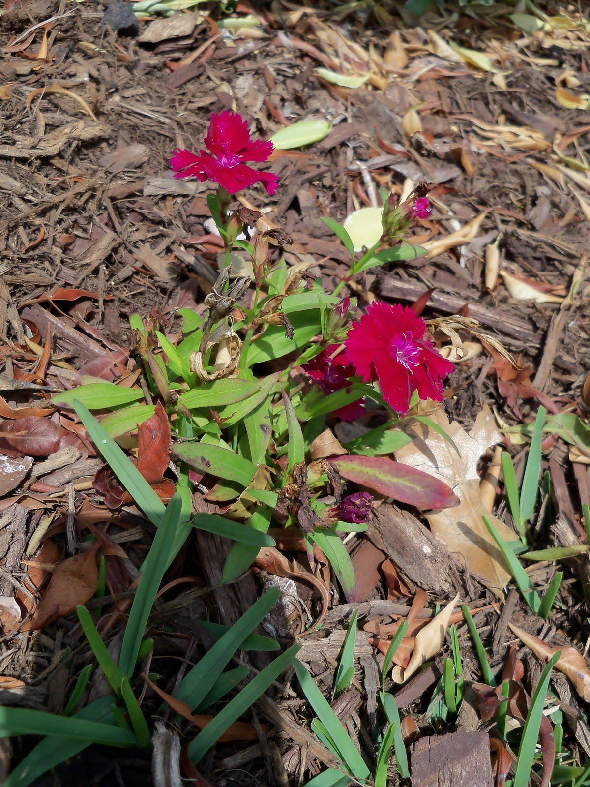 Gardening 2010 - 101_0432.JPG